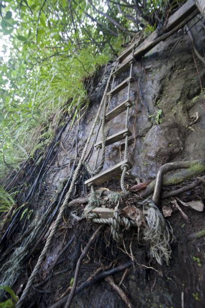 Part of the trail down the cliffs: ropes and roots | Ravine Cyrique waterfall | Dominica