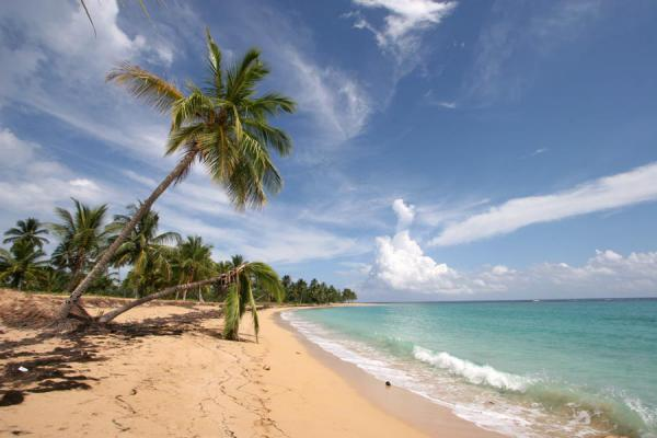 Palm trees and long stretches of empty white beach at Las Terrenas - 多明尼加共和国