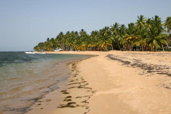 Photo de Deserted beach with palmtrees just outside Las Terrenas - République dominicaine - Amérique
