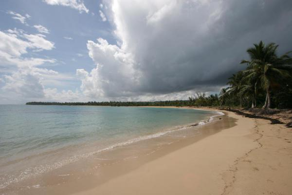 Beach almost until the horizon at Las Terrenas - 多明尼加共和国