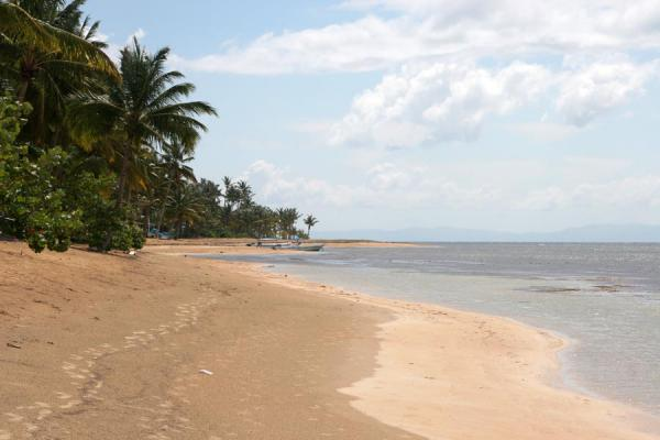 Deserted stretch of beach near Las Terrenas | Las Terrenas | 多明尼加共和国