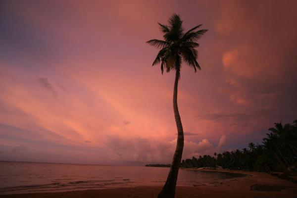 Sunset with palm tree at the Las Terrenas beach | Las Terrenas | Dominicaanse Republiek