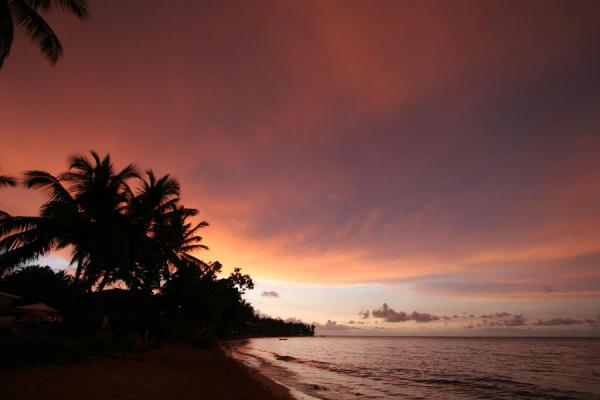 Picture of Las Terrenas beach at sunset: pink sky and black palm trees