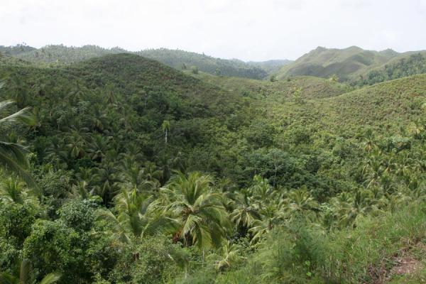 Picture of Limón waterfall (Dominican Republic): Green landscape: view from the path to Limón waterfall