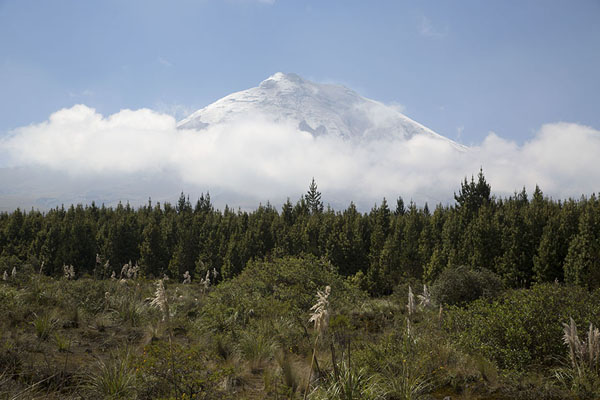 Foto van Ecuador (Snowy Cotopaxi floating on the green landscape of central Ecuador)