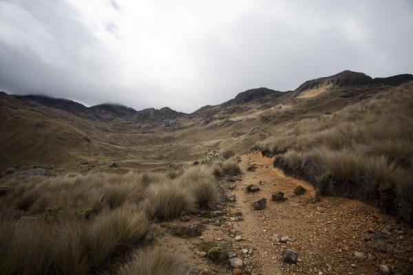 Picture of El Cajas National Park (Ecuador): Mountain trail leading through the straw grass of a valley in El Cajas
