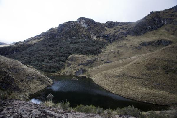Picture of El Cajas National Park (Ecuador): Forest climbing against a mountain on the shore of a lagoon in El Cajas