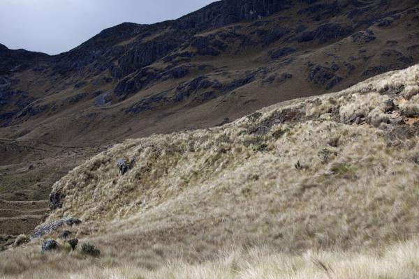 Sun shining on straw grass covered mountain in El Cajas | Parc National El Cajas | l'Equateur