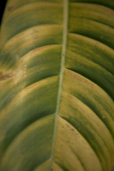 Foto van Close-up of leaf in the cloudforest of MindoMindo - Ecuador