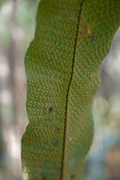 Foto van Close-up of a leaf in the cloud forestMindo - Ecuador