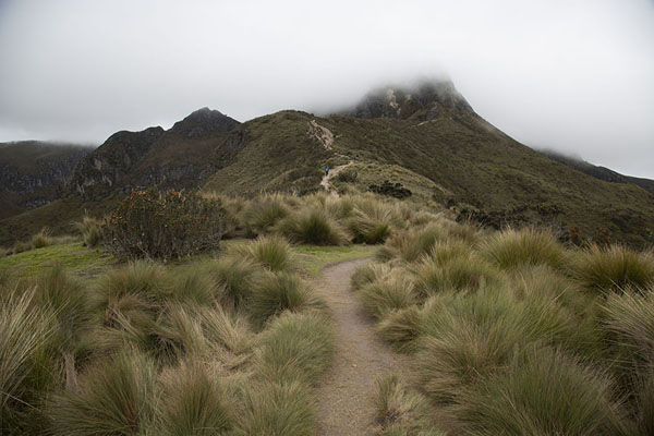 Trail leading through the paramo landscape with Rucu Pichincha wrapped in clouds | Rucu Pichincha | Ecuador