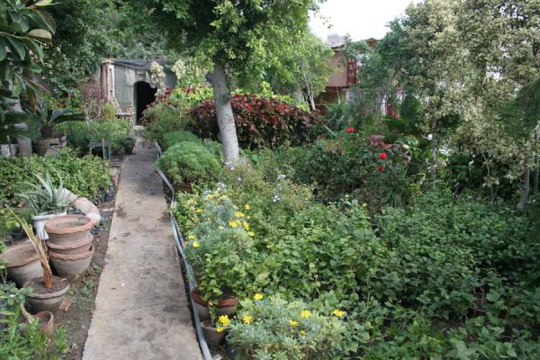 Carefully tendered garden in front of one of the houseboats | Houseboats | Egypt