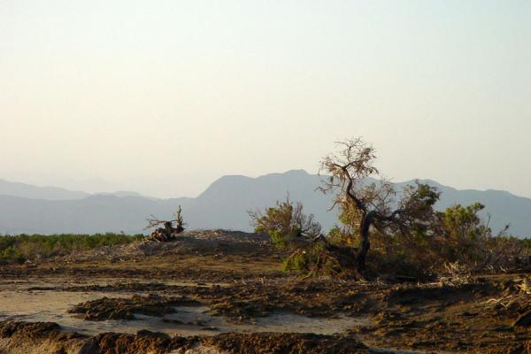 Picture of Tree and mountains in Danakil Depression