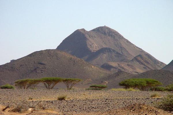 Picture of Tenacious trees surviving in the dry Dankalia desertDankalia - Eritrea