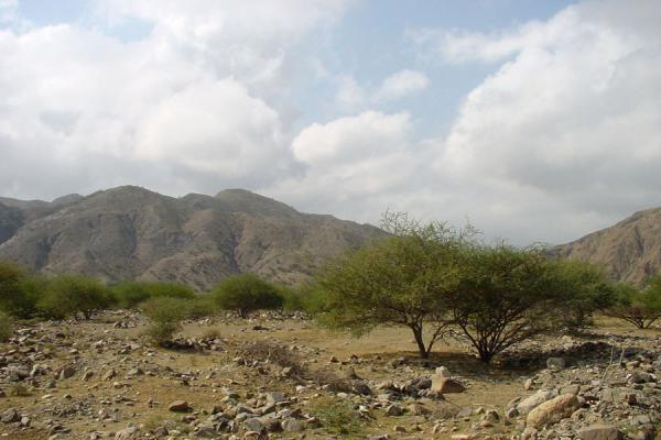 Picture of Dankalia (Eritrea): Dankalia region: trees and mountains