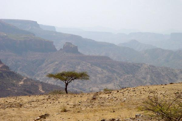 Lone tree with Ethiopia in the background | Hamm | Eritrea