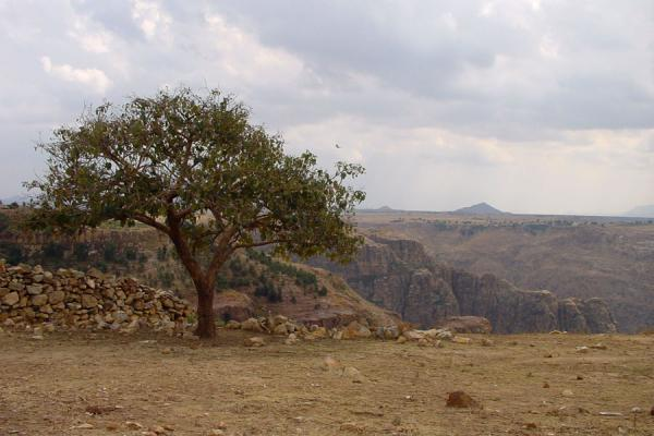 Tree on the edge of one of the cliffs on the way to Hamm, Ethiopia in the background | Hamm | Eritrea