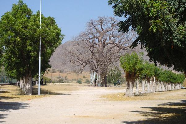 Approaching the baobab tree | Maryam Dearit | Eritrea