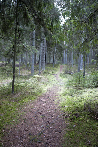 Foto van Trail through the forest of Lahemaa National ParkLahemaa - Estland