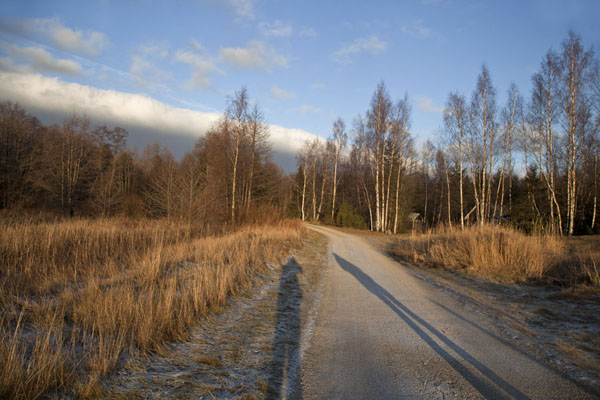 Foto van The forest of Lahemaa National Park with long shadowsLahemaa - Estland