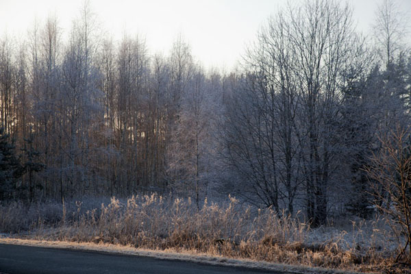 Foto di Forest with frost-covered trees in Lahemaa National Park - Estonia - Europa