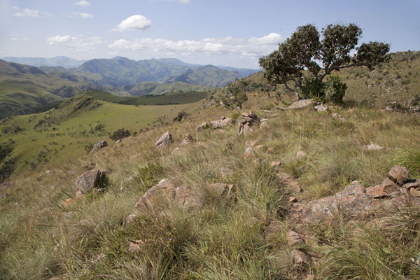 Tree and rocks are common ingredients of the landscape of Malolotja National Park | Malolotja National Park | Eswatini