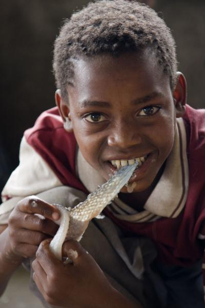 Ethiopian boy filing a fish with his teeth at the fishmarket of Awassa | Awassa | Ethiopië