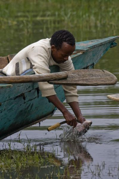 Preparing a fish sitting in a boat | Awassa | Ethiopië