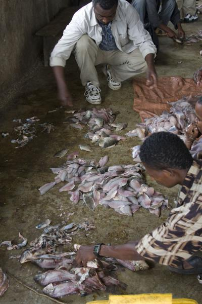 Preparing fish at the fishmarket of Awassa | Awassa | Ethiopië