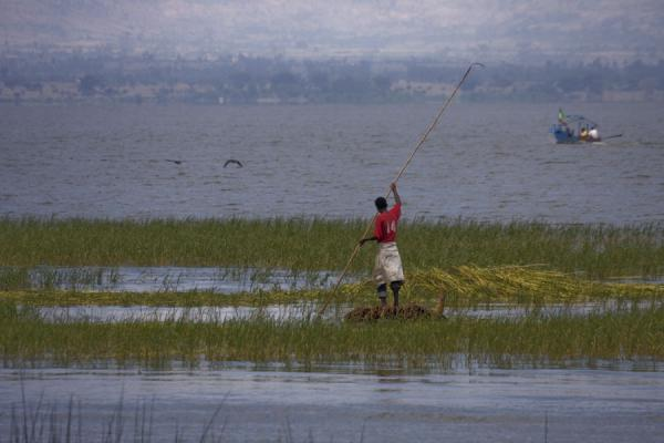 Photo de Harvesting reed: Ethiopian on small boat in Lake AwassaAwassa - l'Ethiopie