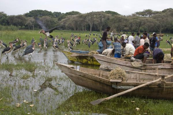 Photo de Fishermen and marabous at the fishmarket near AwassaAwassa - l'Ethiopie