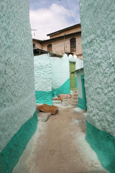 Green is the dominant colour in houses | Harar | Ethiopia