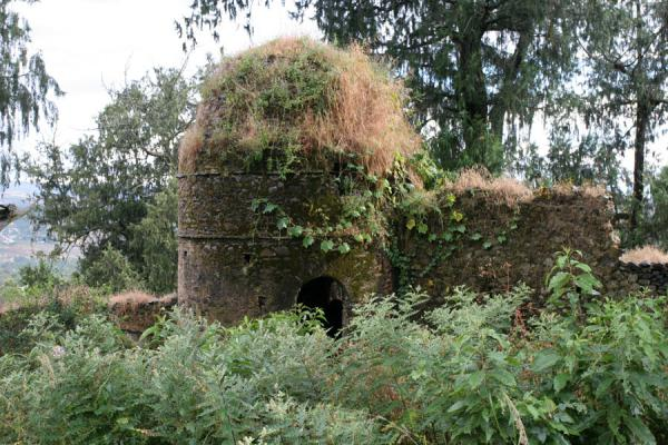 Ruins of tower at Kuskuam palace covered by vegetation | Kuskuam | Ethiopia