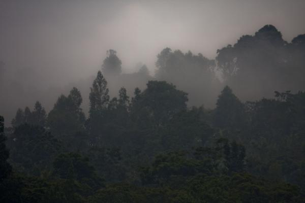 Early morning fog over the trees around Yirgalem | Yirgalem | Etiopia