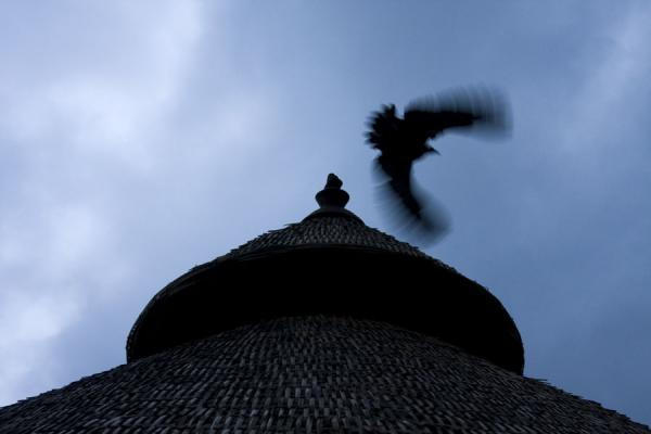 Vulture taking off from a tukul near Yirgalem | Yirgalem | Ethiopia