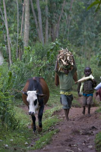 Picture of Boys carrying wood on a muddy path in the forest - Ethiopia - Africa