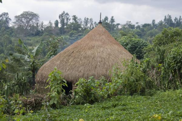 Hut blending in with the landscape around Yirgalem | Yirgalem | Etiopia