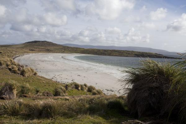 Picture of Carcass Island (Falkland Islands (Malvinas)): Beach at Carcass Island