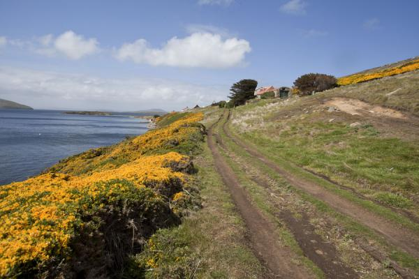 Foto di Friendly landscape with flowers at New IslandNew Island - Isole Falkland