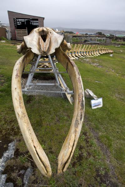 Skeleton of whale made of wood in a garden in Stanley | Stanley | Islas Malvinas