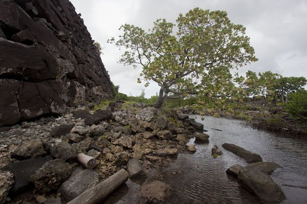 Picture of Sea-side wall of Nan DouwasNan Madol - Federated States of Micronesia