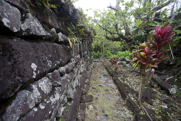 Outer wall of Nan Douwas, the Fortress of Kings, with flowers | Nan Madol | Federale Staten van Micronesia