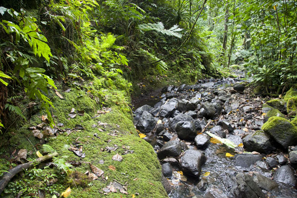 Picture of Sahwarlap stream close to Sahwarlap falls - Federated States of Micronesia - Oceania