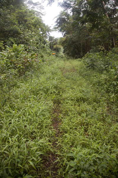 Picture of Trail to the top of Sokehs mountain right over Sokehs ridge - Federated States of Micronesia - Oceania