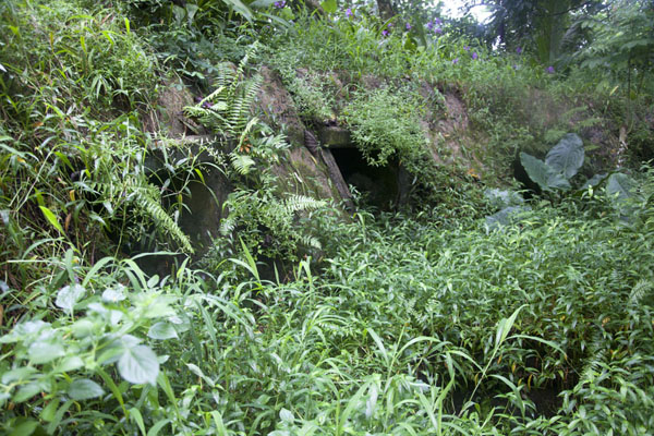 Picture of Japanese bunker hidden by lush vegetationSokehs ridge - Federated States of Micronesia