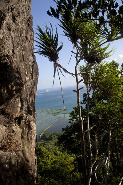 Sokehs rock rises straight up from the forest | Sokehs rock | Federated States of Micronesia