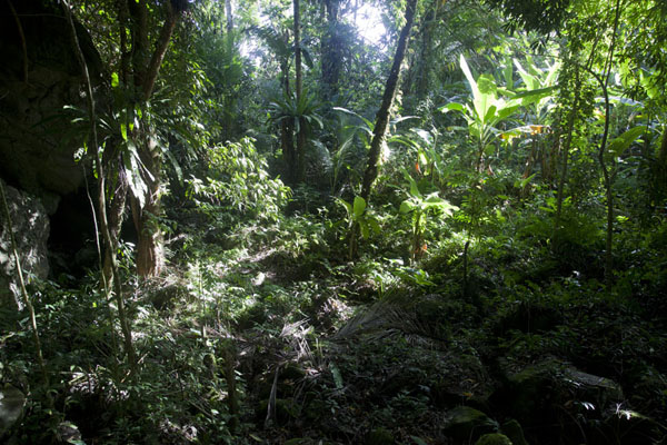 The forest at the foot of Sokehs rock | Sokehs rock | Federated States of Micronesia