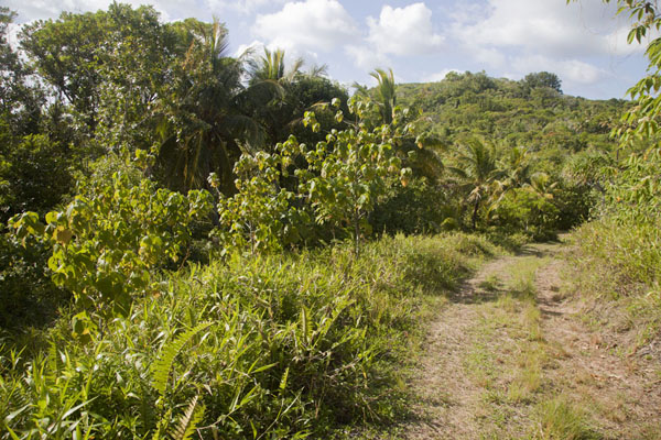 The Tamilyog Trail on the eastern side of the island | Tamilyog Trail | Federated States of Micronesia
