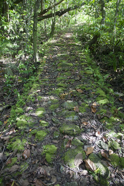 Foto van Stone path, part of the Tamilyog TrailTamilyog Trail - Federale Staten van Micronesia