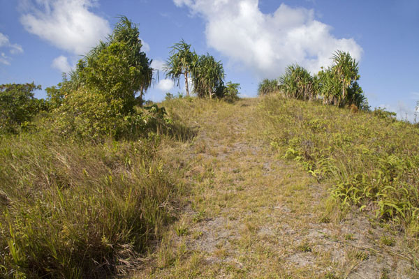 Tamilyog Trail leading up a hill | Tamilyog Trail | Federated States of Micronesia